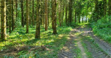 Wanderung bei Altheim mit Ziel nach Zähringen