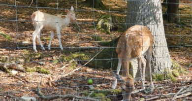 Spaziergang im Wildpark Eichert in Heidenheim