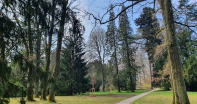 Botanischer Schloßpark vom Schloß Seyfriedsberg